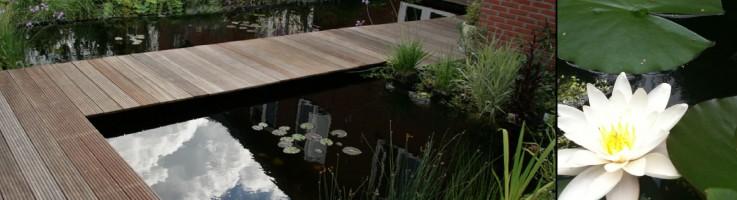 Aanleg-watertuin-Groencombinatie-Ruisendaal